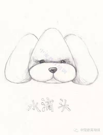 泰迪狗手绘简笔